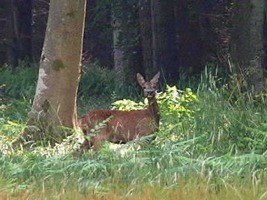 Forêt d Hesdin